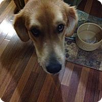 Adopt A Pet :: Allie - Yorktown, VA