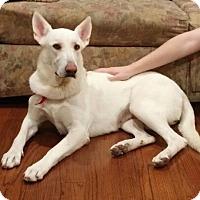 Adopt A Pet :: Diamond - Bardonia, NY