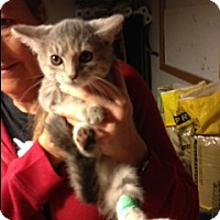 Adopt A Pet :: Padme, - Troy, OH