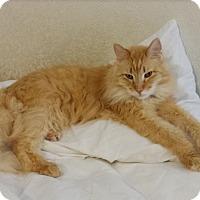 Adopt A Pet :: Mycroft - Dallas, TX