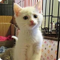 Adopt A Pet :: WHIMSEY - Acme, PA