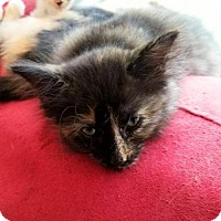 Adopt A Pet :: Roxy - Austin, TX
