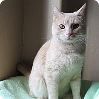 Adopt A Pet :: Cy - Fountain Hills, AZ