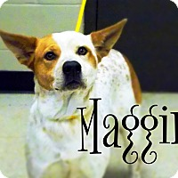 Adopt A Pet :: Maggie - Defiance, OH