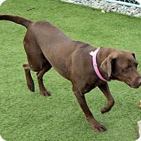 Adopt A Pet :: Hershey - Midlothian, VA