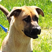 Adopt A Pet :: Carly - Grants Pass, OR