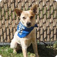 Adopt A Pet :: *HASTE - Norco, CA