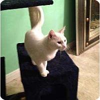 Adopt A Pet :: Monty - Mobile, AL
