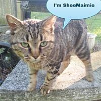 Adopt A Pet :: Sheemaimee - Salisbury, NC