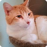 Adopt A Pet :: Jax - San Antonio, TX