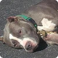 Adopt A Pet :: LANA - Kimberton, PA