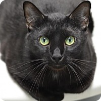 Adopt A Pet :: Shadow	160233 - Atlanta, GA