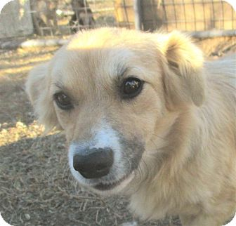 Terrier (Unknown Type, Small)/Dachshund Mix Puppy for adoption in Godley, Texas - Jack