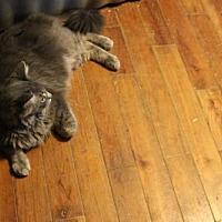 Adopt A Pet :: Rocky - Liverpool, NY