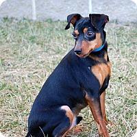 Adopt A Pet :: Rocky - Lexington, KY