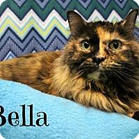 Adopt A Pet :: Bella - Melbourne, KY