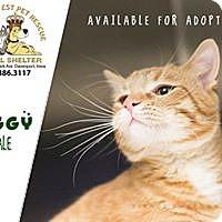 Adopt A Pet :: Miggy - Davenport, IA