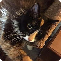 Adopt A Pet :: Ragoo - Columbia, SC