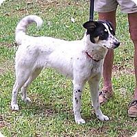 Adopt A Pet :: Precious - Little River, SC