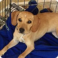 Adopt A Pet :: Sandy - Blue Ridge, GA