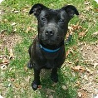 Adopt A Pet :: Atticus - Richmond, VA