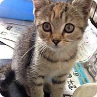 Adopt A Pet :: Simone - Jefferson, NC