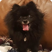 Adopt A Pet :: Loofa - conroe, TX