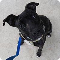 Adopt A Pet :: Holly - Hillsboro, OH