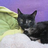 Adopt A Pet :: Mercy - Ridgway, CO