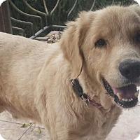 Adopt A Pet :: Aslan - Washington, DC