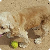 Adopt A Pet :: Monk - Tucson, AZ