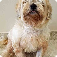 Adopt A Pet :: ADOPTED!!!   Happy - Channahon, IL