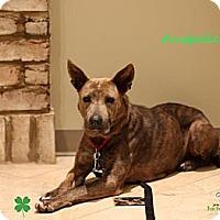 Adopt A Pet :: Anabelle - Alpharetta, GA