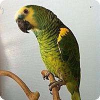 Adopt A Pet :: Birt - St. Louis, MO