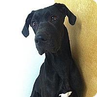 Adopt A Pet :: Sasha - Painesville, OH