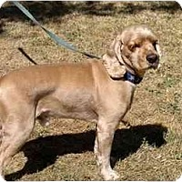 Adopt A Pet :: Chance - Tacoma, WA