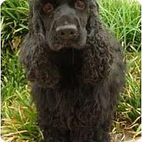 Adopt A Pet :: Babe - Sugarland, TX