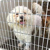 Adopt A Pet :: Harrod - Encinitas, CA