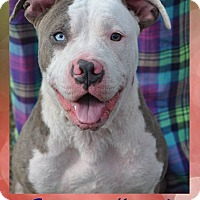 Adopt A Pet :: Blueberry - Lodi, CA