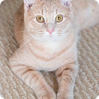 Adopt A Pet :: Ingrid - Chicago, IL