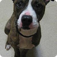 Adopt A Pet :: Pierce - Gary, IN