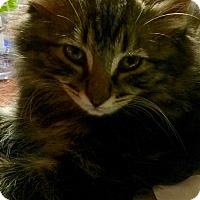 Adopt A Pet :: Ana &Elsa - Southington, CT