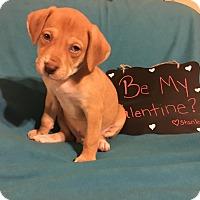 Adopt A Pet :: Stanley - Grand Rapids, MI