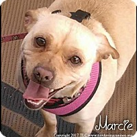 Adopt A Pet :: Marcie - Simi Valley, CA