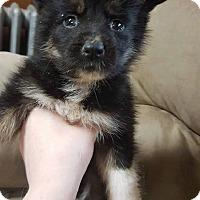 Adopt A Pet :: MONTIE - Winnipeg, MB