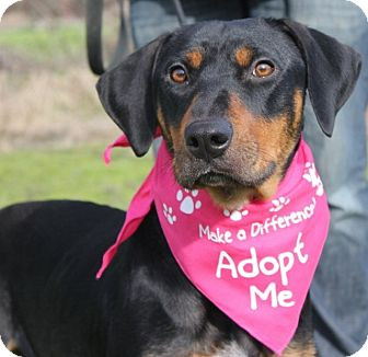 Rottweiler Mix Dog for adoption in Grants Pass, Oregon - Noel