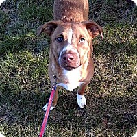 Adopt A Pet :: Cash - Nashua, NH