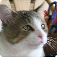 Adopt A Pet :: Willie - Naples, FL