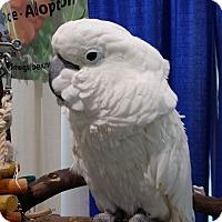 Adopt A Pet :: Lazarus - Lenexa, KS