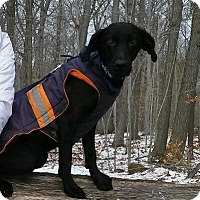 Adopt A Pet :: Irresistible Nice Nick - Madison, NJ